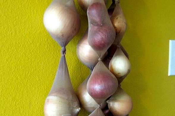 10 ways to make onions last longer (up to 8 months+)